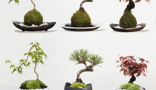 わびさび植物の苔玉盆栽の切り抜き画像を樹木素材.comで販売しています